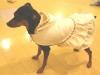 Hal_in_dress